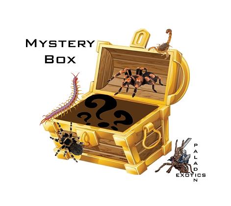 Tarantula Mystery Box (Please read description before purchase)