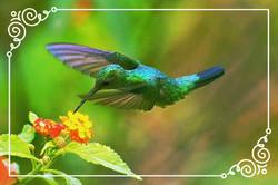 Costa Rica Hummingbird Magic!