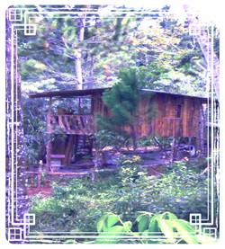 Iguana Studio East View