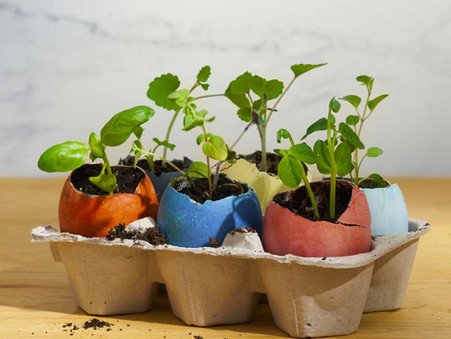 How to use eggshells as a seed starter