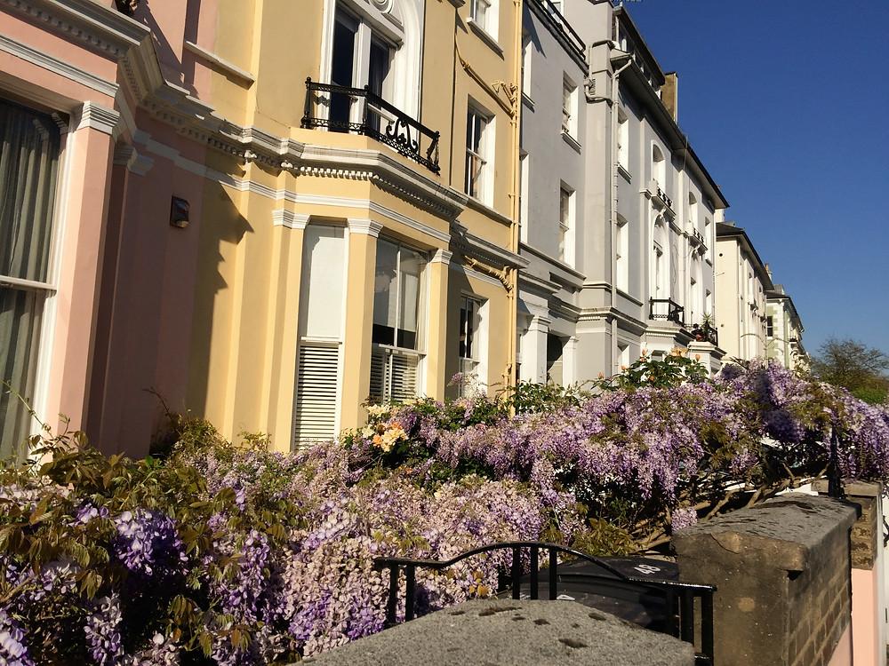 Primrose Hill, Regency houses, wisteria, pastel