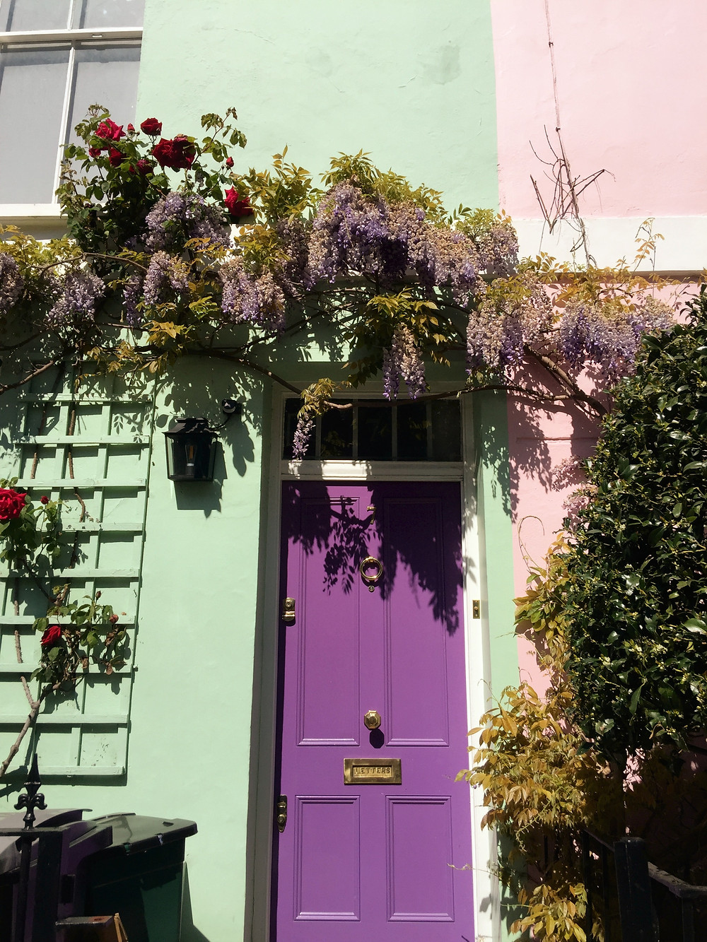 Wisteria and deep red roses frame a purple door on the front of a seafoam green house