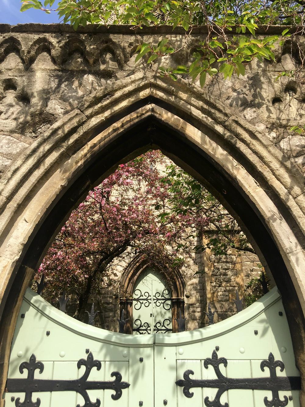 St Mark's Church, cherry blossoms, church, canal