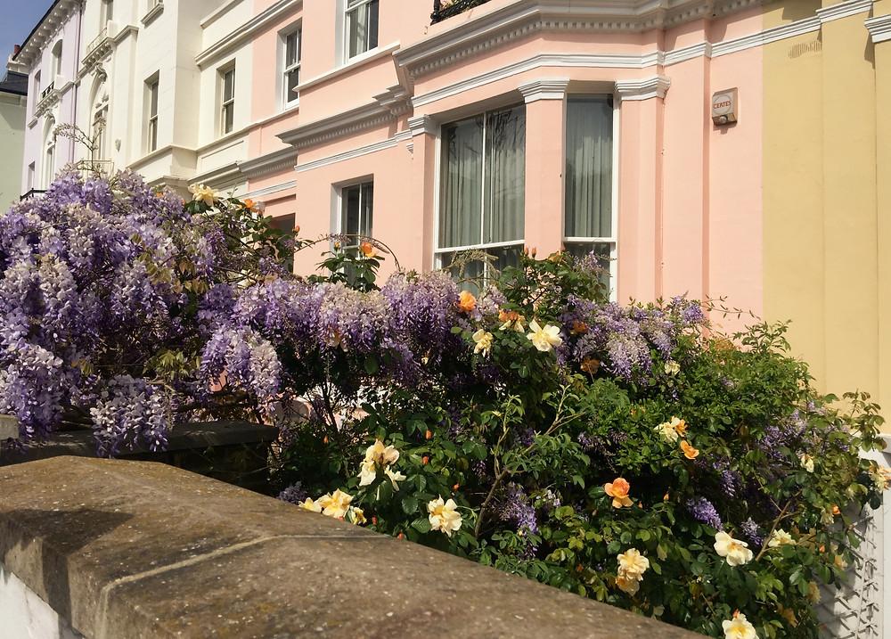 Wisteria, tulips, Angel, boxed garden, gardens