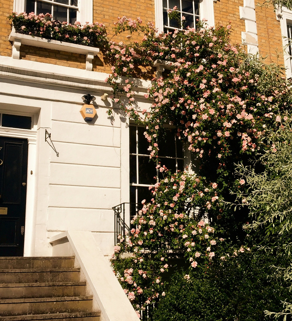 Pink and peach roses climb over the front of a yellow brick house on Rochester Road