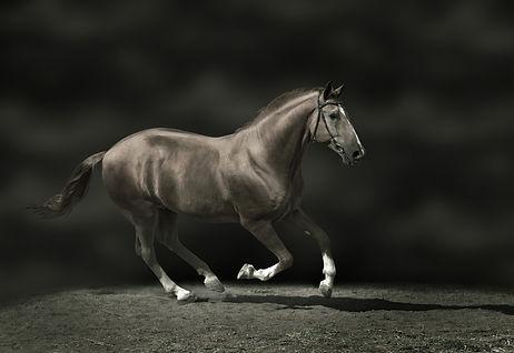 Jamie Payton Movie Horse