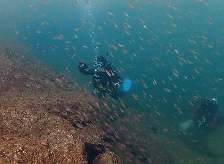 【10月13日】ヘッドランドは魚が群れ群れでしたが・・・