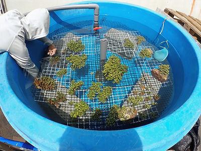 サンゴ水槽1.jpg
