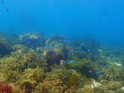 【3月18日】海藻を楽しむ