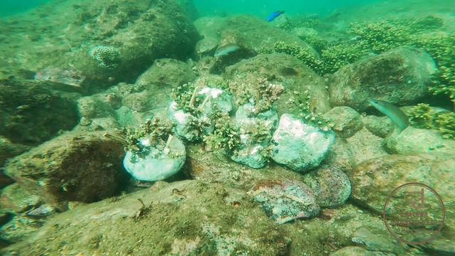 【10月11日】植樹したサンゴを海へ