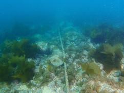 【4月22日】海藻刈り