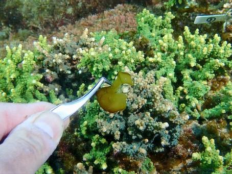 【1月15日】海藻のシーズンに