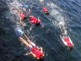 すぐにシュノーケリングで泳げるようになります