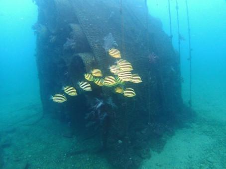 土管魚礁が面白し♪