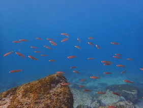 魚と戯れてダイビングを体験