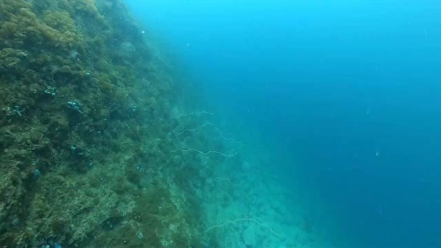 【5月1日】海の中スッキリ♪