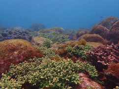 【3月23日】サンゴを守っていくこと