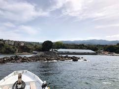 【3月29日】亀島と達磨山