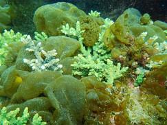 【2月27日】この時季のサンゴの保全活動