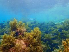 【3月25日】海藻がイイ感じに