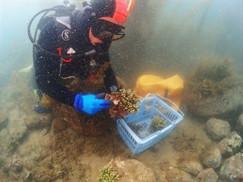 【7月29日】サンゴ水槽へ