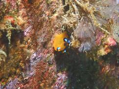 沼津の海でウミガメと泳ぐ