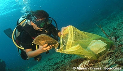 海中をクリーンアップするダイバー.png