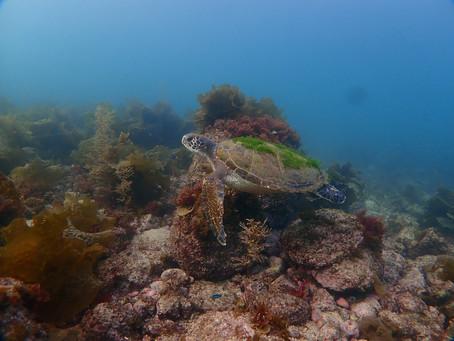サンゴを守るために