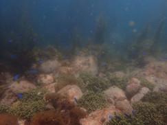 ウミウシは海藻が好き?