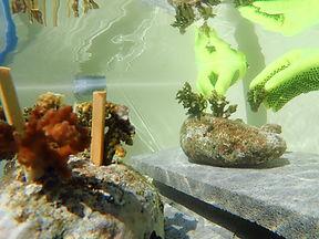 planting-coral (11).jpg
