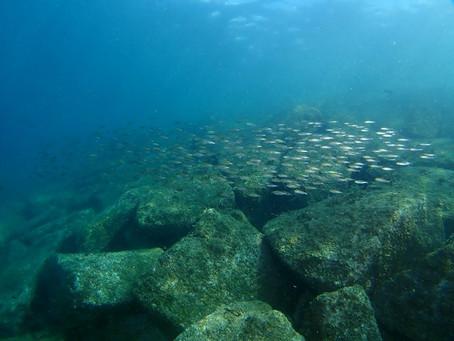 透明度と魚影が素晴らしい!!