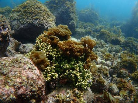 海藻の季節だからこそ