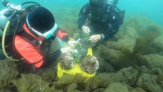 サンゴの植樹コース