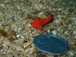 1円玉よりも小さな....