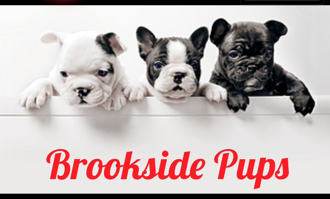Brookside Pups Puppies For Sale