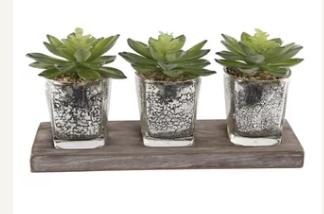desktop plants from Wayfair by Gracie Oa