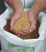 HAPI Soybeans hi-res (2)_edited.jpg