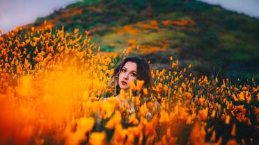 Poppy Fields March 2019
