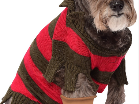 Dress Your Pet As Freddy Krueger This Year