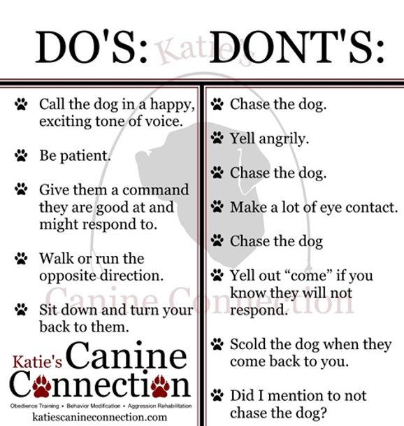 dosdontslostdog.jpg