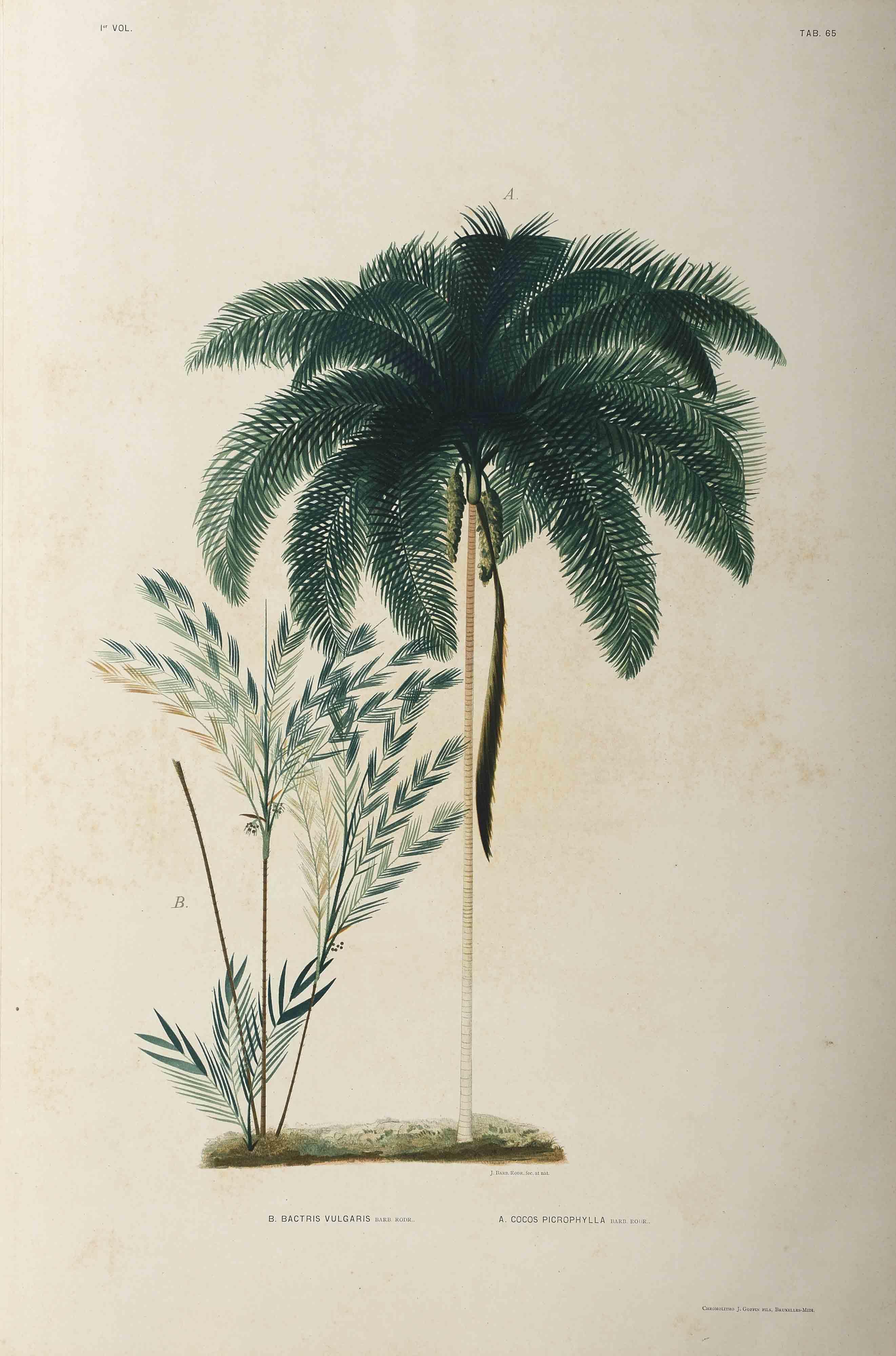 Bothanical image