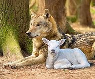 wolf & lamb.jpg
