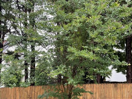 Majesty in Waiting : Wisdom of The 'Dead' Tree