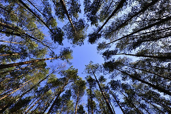 forest-with-blue-sky.jpg
