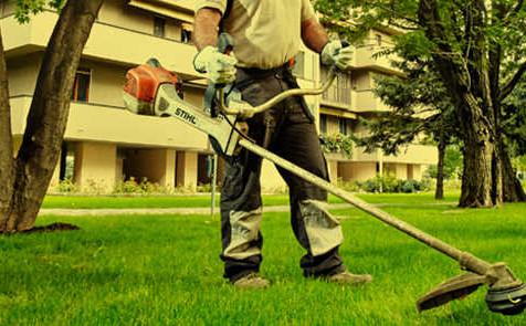 Manutenzione del verde:  abilitazione per la professione