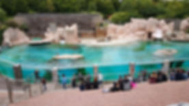 zoo-amneville-bassin.jpg