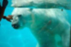 Zoo_Amnéville_4.jpg