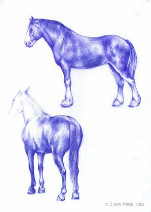 BLUE PEN HORSE STUDY / ÉTUDE DU CHEVAL AU STYLO BLEU