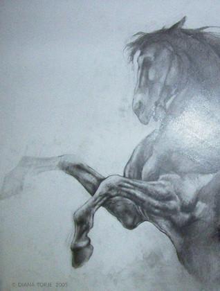 THE WAR HORSE / LE CHEVAL DE GUERRE