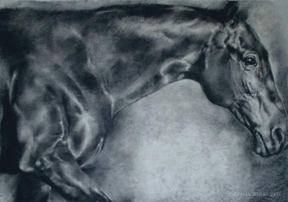 FULL SCALE HORSE STUDY / ÉTUDE DE CHEVAL GRANDEUR NATURE